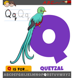 Letter q from alphabet with quetzal bird animal vector