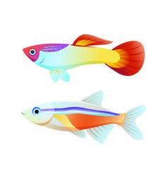 Neon tetra and guppy fish color informative poster vector