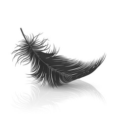 3d realistic falling black fluffy twirled vector