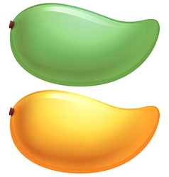 A green and a yellow mango vector image