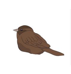 A sparrow of color vector
