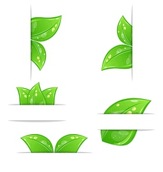 Set green ecological labels with leaves vector