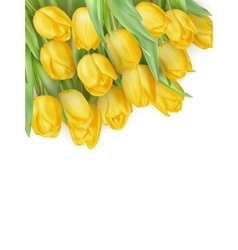 Tulip flowers isolated eps 10 vector
