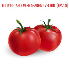 Two red tomatoes on a white background vector