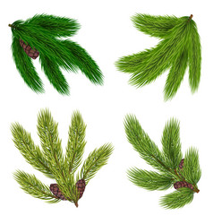 green branches of coniferous trees collection vector image vector image