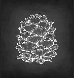 chalk sketch pine nut vector image
