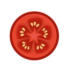 Fresh slice tomato organ vegetable vector