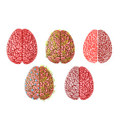 healthy smart creative brain brainstorming and vector image