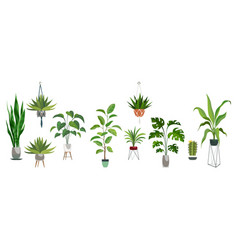 pot plant set plants plastic decorative container vector image