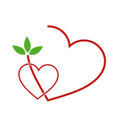 Two Hearts with leaves vector image