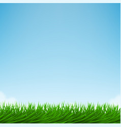 green grass and bright blue sky vector image