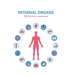 Human anatomy icons internal organs vector image