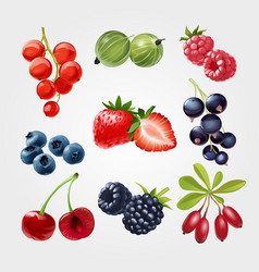 Fruit strawberry food red sweet berry cherry fig vector