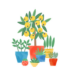 home plants in ceramic pots flat vector image