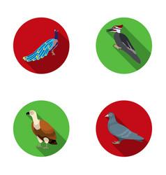 Peacock woodpecker and various species birds set vector