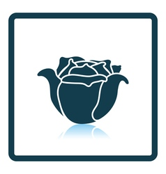 Cabbage icon vector image