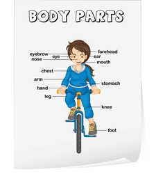 Body Parts Diagram Poster vector image vector image