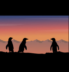 at night penguin silhouette beauty landscape vector image
