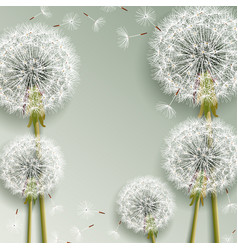 beautiful grey background with dandelions blowing vector image