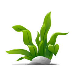 decorative plant with long wavy leaves vector image