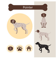Pointer dog breed infographic vector