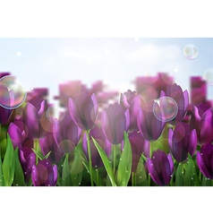 Purple colored tulips flowers in the garden vector