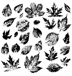 Set autumn leaves on a white background leaf vector