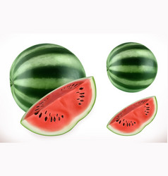 watermelon fresh fruit 3d realistic icon vector image