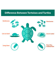 difference between tortoises and turtles vector image