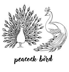 peacocks birds doodle black contour vector image