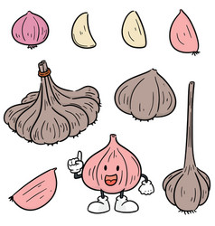 set of garlic vector image