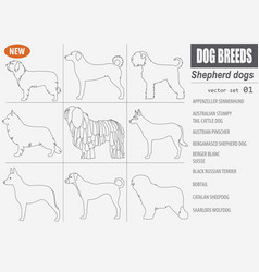 shepherd dog breeds sheepdogs set icon isolated vector image