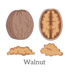 Walnut Kernels vector image
