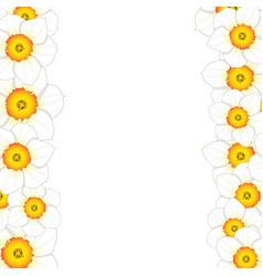 white daffodil - narcissus flower border vector image