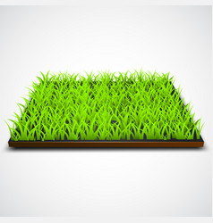 square of green grass field vector image vector image