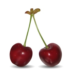 Pair of sweet cherries vector