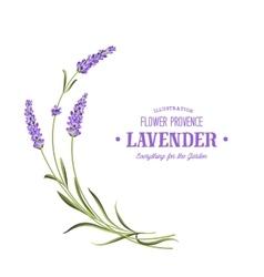 Bunch lavender vector