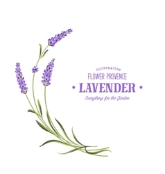 Bunch of lavender vector