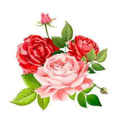 lovely rose flower vector image