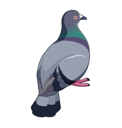 Pigeon isometric icon vector image