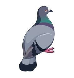 Pigeon isometric icon vector
