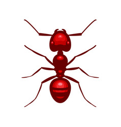 red ant insect vector image