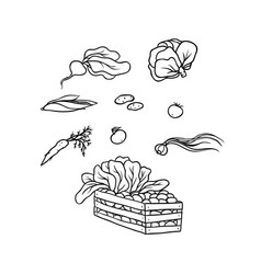 Sketch set vegetable culture agricultural vector