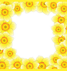 Yellow daffodil - narcissus flower border vector