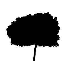 young tree silhouette vector image
