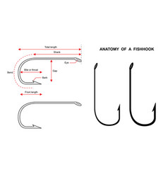 anatomy a fish hook fish hook isolated on white vector image