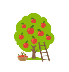Apple fruits tree orchard garden harvest ladder vector