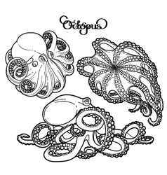 Graphic octopus collection vector image