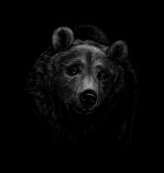 portrait of a brown bear head on a black vector image