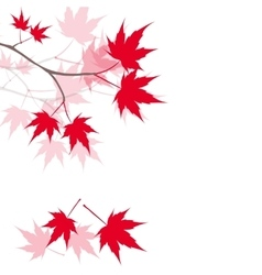 Red maple leaves on the branches Japanese red vector
